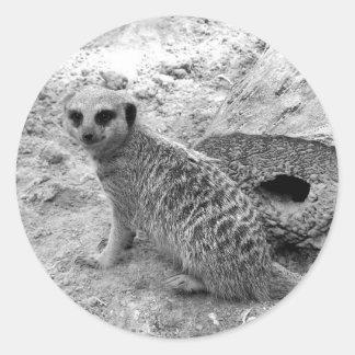 Meerkat que mira la imagen del photogarph del etiquetas redondas