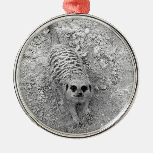 Meerkat que mira para arriba de imagen de la ornamentos de navidad