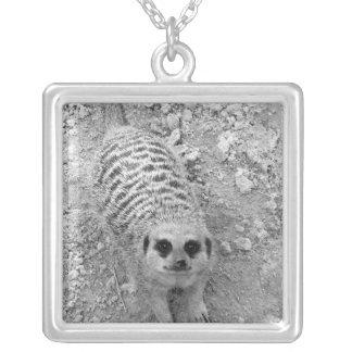 Meerkat que mira para arriba de imagen de la fotog collar plateado