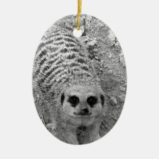 Meerkat que mira para arriba de imagen de la fotog ornamentos de reyes