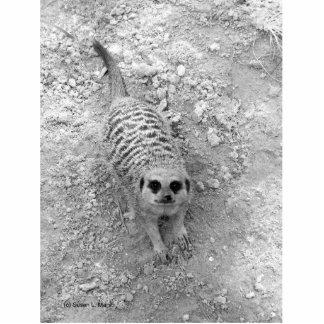 Meerkat que mira para arriba de imagen de la fotog escultura fotografica