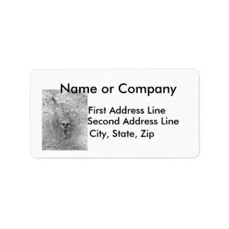Meerkat que mira para arriba de imagen de la fotog etiquetas de dirección