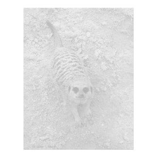 Meerkat que mira para arriba de imagen de la fotog membrete a diseño
