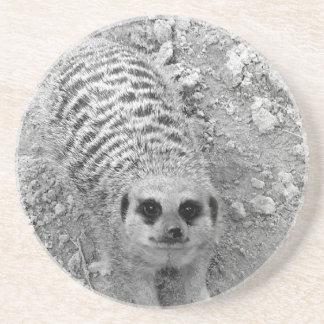Meerkat que mira para arriba de imagen de la fotog posavasos cerveza