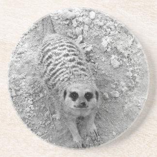 Meerkat que mira para arriba de imagen de la fotog posavasos diseño