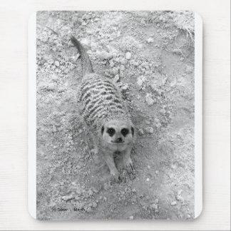 Meerkat que mira para arriba de imagen de la fotog alfombrilla de raton