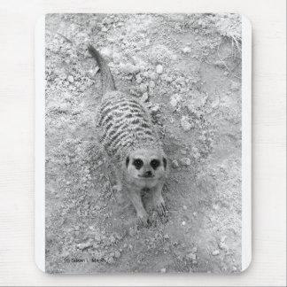 Meerkat que mira para arriba de imagen de la fotog mouse pads