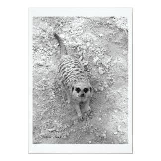 """Meerkat que mira para arriba de imagen de la invitación 5"""" x 7"""""""