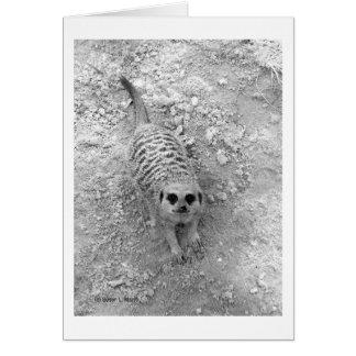 Meerkat que mira para arriba de imagen de la tarjeta pequeña