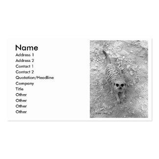 Meerkat que mira para arriba de imagen de la tarjetas de visita