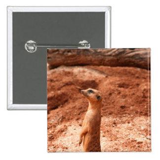 meerkat que se levanta el animal del gato del meer pin cuadrada 5 cm