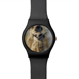 Meerkat Relojes De Mano