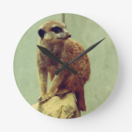 Meerkat Reloj Redondo Mediano