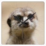 Meerkat Relojes De Pared