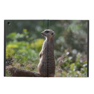 Meerkat salvaje