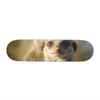Meerkat Skate Board
