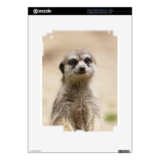 Meerkat Skins Para iPad 2