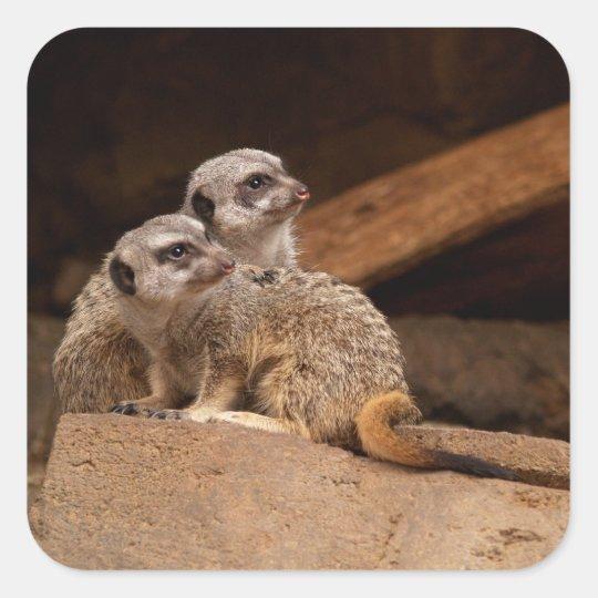 Meerkat Square Sticker