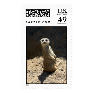 Meerkat Stamp