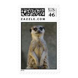 Meerkat Standing Postage stamp