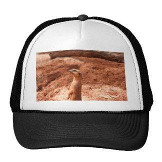 meerkat standing up left side meer cat animal trucker hat