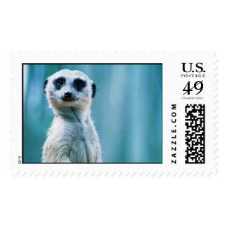 Meerkat Staredown Stamp