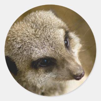 meerkat stickers