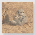 Meerkat Stone Coaster