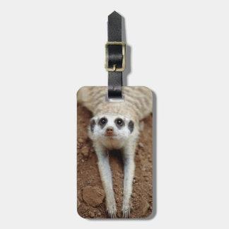 Meerkat (Suricata Suricatta) que se refresca abajo Etiquetas Para Equipaje