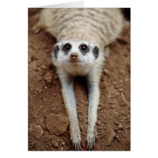 Meerkat (Suricata Suricatta) que se refresca abajo Tarjeta De Felicitación