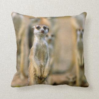 Meerkat (Suricata Suricatta) Sentinels, Karas 2 Throw Pillow