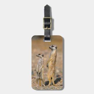 Meerkat (Suricata Suricatta) Sentinels, Karas Bag Tag