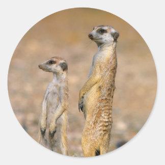 Meerkat (Suricata Suricatta) Sentinels, Karas Classic Round Sticker
