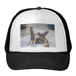 Meerkat Trucker Hats