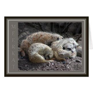 Meerkat Wildlife Card