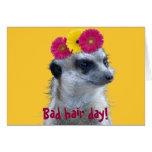 Meerkat with 3 bright gerber daisies cards