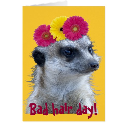 Meerkat with 3 bright gerber daisies greeting card