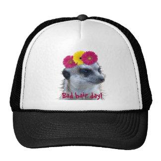 Meerkat with 3 bright gerber daisies trucker hat