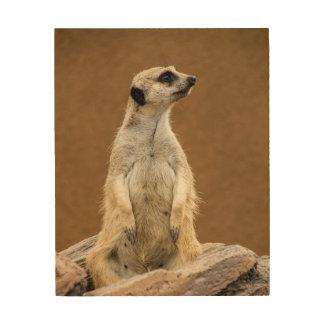 Meerkat Wood Canvas