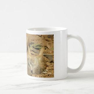 Meerkats adorable taza de café
