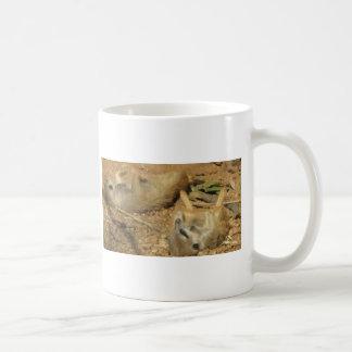 Meerkats adorable tazas de café