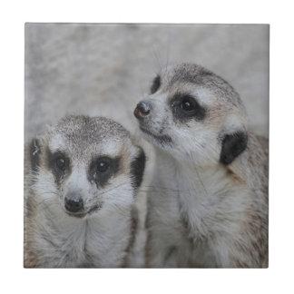 meerkats adorables azulejo cuadrado pequeño