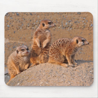 Meerkats at animal reserve mouse pad