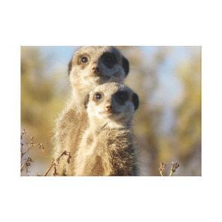 Meerkats Gallery Wrap Canvas