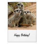 Meerkats en el puesto de observación felicitación