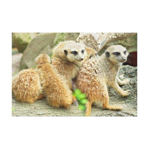 Meerkat's Family - Canvas Canvas Print