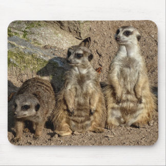 Meerkats Mouse Pad