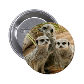 Meerkats on the lookout buttons