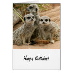 Meerkats on the lookout card