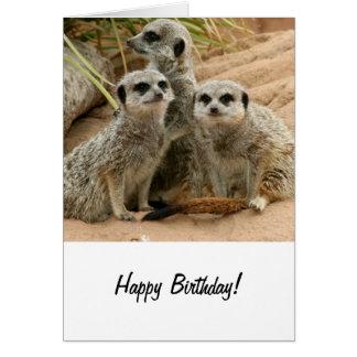 Meerkats on the lookout card
